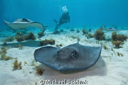 Stingray City is always a great place to get some nice ph... by Michael Schlenk 